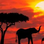 Сафари-туры в Кении