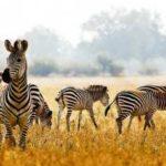Сафари-туры в Замбию
