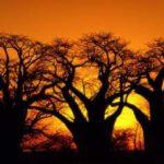 Сафари-туры в Ботсвану